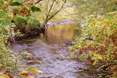 creek3.jpg (66180 bytes)